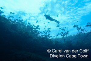Diver floating
